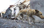 A dog walks past a shop damaged by shelling by Azerbaijan's artillery at a market in Stepanakert, the separatist region of Nagorno-Karabakh, Saturday, Oct. 31, 2020. Nagorno-Karabakh authorities said Azerbaijani military targeted a street market in Stepanakert and residential areas of Shushi on Saturday in violation of a mutual pledge not to target residential areas made after talks in Geneva. (AP Photo)