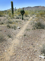 FILE - In this May 24, 2006, file photo, U.S. Border Patrol Senior Agent Sean King patrols a trail in Organ Pipe Cactus National Monument near Lukeville, Ariz. Smugglers in recent weeks have been abandoning large groups of Guatemalan and other Central American migrants in the desert near Arizona's boundary with Mexico, alarming Border Patrol officials who say the trend is putting hundreds of children and adults at risk. (AP Photo/Matt York)