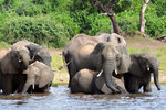 FILE - In this March 3, 2013, file photo, elephants drink water in the Chobe National Park in Botswana. Botswana's President Mokgweetsi Masisi, faces the tightest election of its history on Wednesday, Oct. 23, 2019, after former President Ian Khama, annoyed with his hand-picked successor, Masisi, announced his support for the opposition, after Masisi broke with some of his policies including the loosening of restrictions on elephant hunting in an apparent bid to appeal to rural voters. (AP Photo/Charmaine Noronha/File)