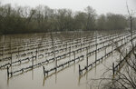 A vineyard along River Road is flooded Wednesday, Feb. 27, 2019, near Forestville, Calif. A river in Northern California's wine country has reached flood stage and forecasters expect it to rise even more as a winter storm lashes the region. The National Weather Service says the Russian River in Sonoma County topped 32 feet Tuesday evening and it could crest at more than 46 feet by Wednesday night. (AP Photo/Eric Risberg)