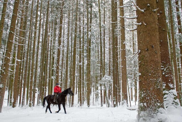 FILE -- In this Monday, Feb. 2, 2015 a woman rides with her horse through a forest near Lofer, Austrian province of Salzburg. The Austrian government has spoken up to correct U.S. President Donald Trump's claim that people in their country live in