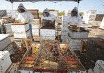 FILE - In this March 22, 2010, file photo, workers, from left, Johan Du Preez, Susan Dupreez and Rouxle Crafford clear honey from dead bee hives at a bee farm east of Merced, Calif. California's Gov. Gavin Newsom is proposing spending $11 billion on programs to combat climate change amid a drought that followed a year of historic wildfires exacerbated by a warming planet. The windfall will fund everything from charging stations for electric cars to preparing communities for disasters ranging from fire, flooding and earthquakes to creating habitat for threatened bumble bees that are essential to pollinating crops in the nation's most productive farmland. (AP Photo/Marcio Jose Sanchez, File)