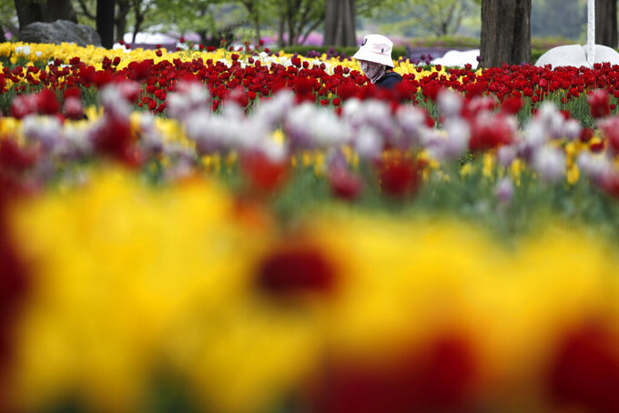 A visitor wearing a face mask as a precaution against the coronavirus walks near a field of tulips at a park in Goyang, South Korea, Friday, April 23, 2021. (AP Photo/Lee Jin-man)