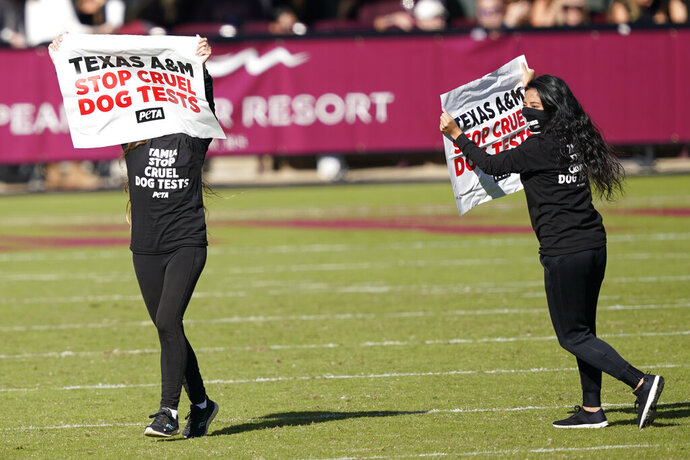 Animal rights activists run on the football field at Davis Wade Stadium during the first half of an NCAA college football game between Texas A&M and Mississippi State in Starkville, Miss., Saturday Oct. 17, 2020. (AP Photo/Rogelio V. Solis)