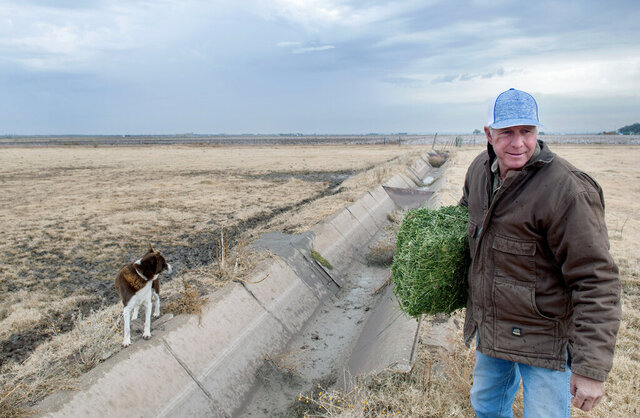 In this Dec. 12, 2019 photo, Craig Ogden, president of the New Mexico Farm and Livestock Bureau, raises cattle, cotton and alfalfa on his farm near Loving, N.M.. His farm is now surrounded by oil and gas production. (Eddie Moore/The Albuquerque Journal via AP)