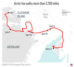 Arctic fox walks more than 2,700 miles from Norway to Canada.;