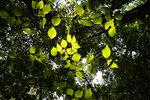 Sunlight filters through trees at the May Prairie State Natural Area on Aug. 20, 2020, in Manchester, Tenn.  Despite their diminished range, Southern grasslands are still home to an incredible diversity of plants and animals -- greater than the surrounding forests, which are often a top priority for conservation. (AP Photo/Mark Humphrey)
