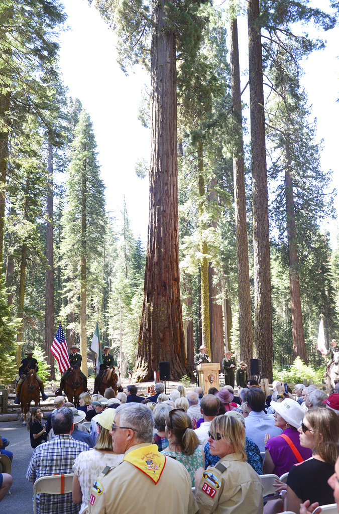 File - In this June 30, 2014 file photo, a giant sequoia in the Mariposa Grove serves as a backdrop for the Yosemite Grant sesquicentennial ceremony at Yosemite National Park, Calif. Yosemite National Park says the largest sequoia grove is ready to open to the public after crews completed a restoration project to protect the nearly 500 ancient trees. Park officials say Mariposa Grove, a 4-acre (1.50-hectare) habitat of the towering reddish-brown trees, will open Friday, June 15, 2018, after being closed for three years. (Craig Kohlruss/The Fresno Bee via AP, File)