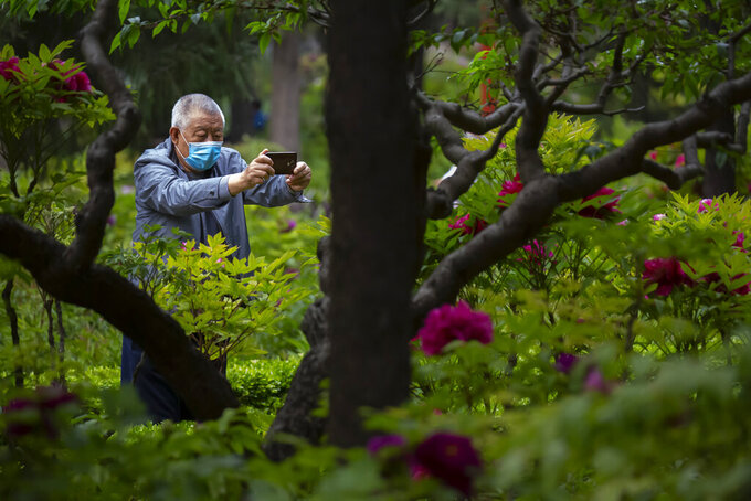 A man wearing a face mask to protect against the spread of the new coronavirus takes a photo of blossoms at a public park in Beijing, Saturday, April 25, 2020. China on Saturday reported no new deaths from the coronavirus for the 10th straight day. (AP Photo/Mark Schiefelbein)