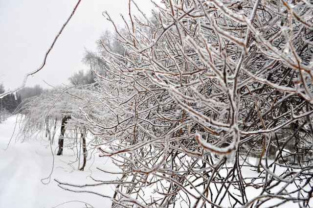 This undated photo shows an iced-up plant in New Paltz, NY. Winter ice can break plant and human limbs. Rock salt, which can be damaging to plants, is not the only way to clear it from paths. (Lee Reich via AP)
