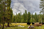 Cows graze as smoke rises from the Dixie Fire burning in Lassen National Forest, Calif., near Jonesville on Monday, July 26, 2021. (AP Photo/Noah Berger)