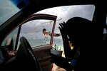Seagulls fly toward a woman feeding them french fries from her car on Taino beach before the arrival of Hurricane Dorian in Freeport, Grand Bahama, Bahamas, Sunday, Sept. 1, 2019. Hurricane Dorian intensified yet again Sunday as it closed in on the northern Bahamas, threatening to batter islands with Category 5-strength winds, pounding waves and torrential rain. (AP Photo/Ramon Espinosa)