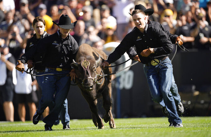 Handlers guide Colorado mascot Ralphie VI on the bison's ceremonial run before an NCAA college football game against Minnesota Saturday, Sept. 18, 2021, in Boulder, Colo. (AP Photo/David Zalubowski)