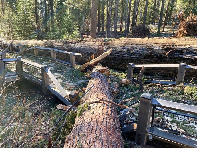 This photo provided by Yosemite National Park shows a boardwalk in the Mariposa Grove in Yosemite National Park was damaged by a fallen ponderosa pine during the Mono wind event on Tuesday, Jan. 19, 2021. Yosemite National Park will remain closed through the weekend after high winds that battered much of California knocked down two giant sequoias and caused millions of dollars in damage. (Yosemite National Park via AP)