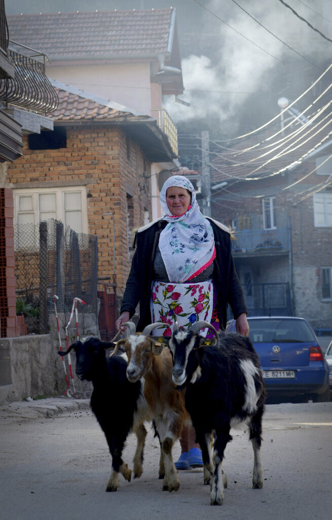 A woman walks her goats in the village of Ribnovo, Bulgaria, Sunday, April 11, 2021. Despite the dangers associated with COVID-19 and government calls to avoid large gatherings, Hundreds of people flocked to the tiny village of Ribnovo in southwestern Bulgaria for a four-day festival of feasting, music and the ritual of circumcision which is considered by Muslims a religious duty and essential part of a man's identity. (AP Photo/Jordan Simeonov)