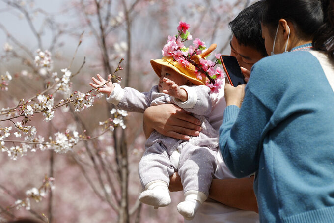 A man holds a child for photos near a cherry blossom tree in Beijing on Wednesday, March 24, 2021. China's population grew last year, the government said Thursday, April 29, 2021 following a news report a once-a-decade census might have found a decline, possibly adding to downward pressure on economic growth. (AP Photo/Ng Han Guan)