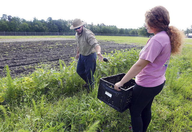 In this Thursday, June 18, 2020 photo, Dorchester County Career and Technology Center instructor Russell Henderson tosses an eggplant he just picked into a basket that agriculture student Mady Platt holds in Dorchester County, S.C. (Brad Nettles/The Post And Courier via AP)