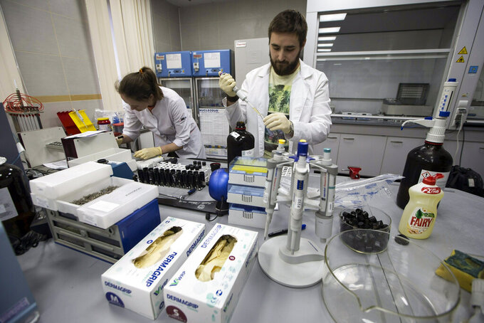 FILE - In this May 24, 2016, file photo, lab technicians work at Russia's national drug-testing laboratory in Moscow, Russia. The Russians were running out of time. Experts from the World Anti-Doping Agency were heading to Moscow to finally receive the trove of data they'd been seeking for two years. Instead of getting ready to hand it over, Russian authorities stayed busy in a round-the-clock endeavor to keep changing, deleting and manipulating the data. Granular details of the plot are sprinkled throughout WADA's previously confidential 89-page report, obtained by The Associated Press.  Among the most brazen projects, the report says, was the rewriting of memos to make it look as though the man who exposed the plot was leveraging the Russian doping scheme to line his own pockets. (AP Photo/Alexander Zemlianichenko, File)