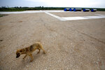 FILE - In this Friday, June 13, 2014 file photo, a stray dog walks next to the first section of the Gazprom South Stream natural gas pipeline near the village of Sajkas, 80 kilometers (50 miles) north of Belgrade, Serbia. Defying U.S. calls to reduce its dependency on energy supplies from Russia, Serbia has on Friday, Jan. 1, 2021 officially launched a new gas link that will bring additional Russian gas to the Balkan country via Bulgaria and Turkey. (AP Photo/Darko Vojinovic, File)