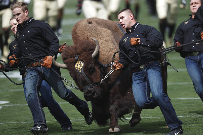 FILE - In this Sept. 7, 2019, file photo, handlers guide Colorado NCAA college football buffalo mascot Ralphie on a ceremonial run at a game against Nebraska, in Boulder, Colo. Ralphie V will retire after 12 seasons of roaming the field. The university said Tuesday, Nov. 12, 2019, that Ralphie, who turned 13 in October, hasn't been showing the same consistency as she has in prior seasons. (AP Photo/David Zalubowski, File)