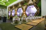 In this  Thursday, June 6, 2019 cannabis buds under a glass bell are displayed at a cannabis light store in Milan, Italy. Interior Minister Matteo Salvini has been an outspoken opponent of the marijuana light businesses that sprouted up around the country after pioneering 2016 legislation that many saw as a step toward eventual marijuana liberalization.(AP Photo/Luca Bruno)