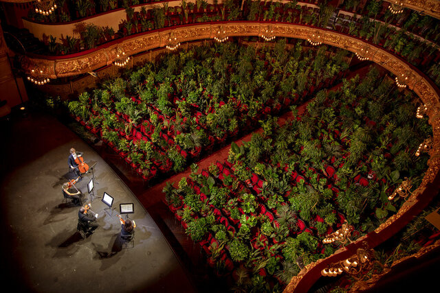 Musicians rehearse at the Gran Teatre del Liceu in Barcelona, Spain, Monday, June 22, 2020. The Gran Teatre del Liceu reopens its doors, in which the 2,292 seats of the auditorium will be occupied on this occasion by plants. It will be on 22 June, broadcast live online, when the UceLi Quartet string quartet performs Puccini's