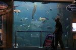 A visitor passes an Alaska SeaLife Center aquarium on July 6, 2020, in Seward, Alaska. Three-quarters of past visitors to the Alaska SeaLife Center, an aquarium and research center that runs Alaska's only marine mammal rescue program, have been tourists who arrive by plane or cruise ship. With most cruises canceled due to the coronavirus pandemic, there are few people to see the octopus, and the site's rare Steller sea lions. (Marc Lester/Anchorage Daily News via AP)