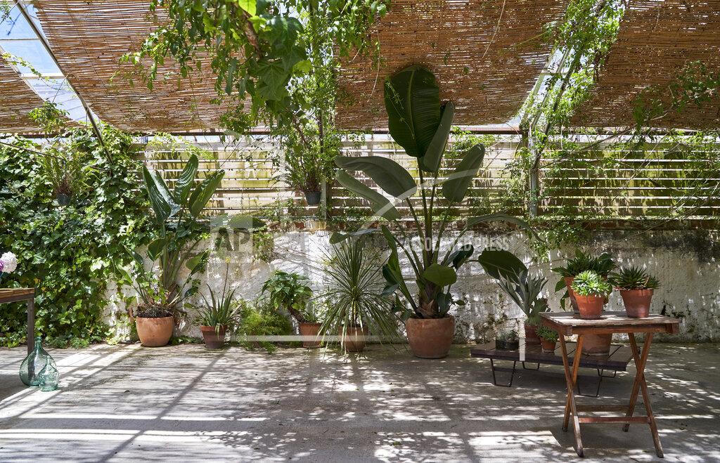Various plants growing in backyard