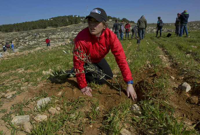 In this Friday, Jan. 25, 2019 photo, young American rabbinical students plant olive trees, on the land near the West Bank village of Attuwani, south of Hebron. The students are doing more than visiting holy sites, learning Hebrew and poring over religious texts during their year abroad in Israel. In a departure from past programs that focused on strengthening ties with Israel and Judaism, the new crop of rabbinical students is also reaching out to the Palestinians. (AP Photo/Nasser Nasser)