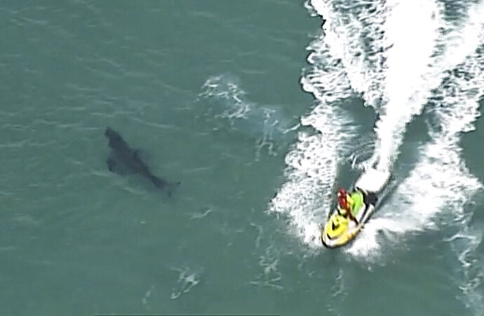 In this image made from aerial video, a jet ski passes over a shark swimming along the coast of Kingscliff, New South Whales, Australia, Sunday, June 7, 2020. A 60-year-old surfer was attacked and killed by a 3-meter (10-foot) shark off the coast of northern New South Wales state on Sunday, Australian police said. (ABC/CH7/CH9 via AP)