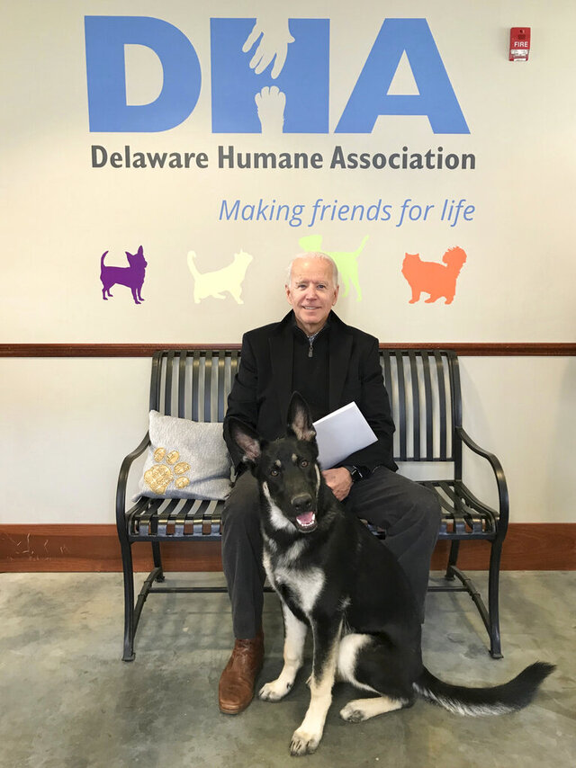 This Nov. 16, 2018, photo, provided by the Delaware Humane Association shows Joe Biden and his newly-adopted German shepherd Major, in Wilmington, Del. (Stephanie Carter/Delaware Humane Association via AP)