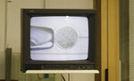 FILE - In this Sunday, Aug. 25, 2019 file photo, a monitor displays the inseminating of eggs from the last two remaining female of northern white rhinos with frozen sperm from two rhino bulls of the same species, at the Avantea laboratory in Cremona, Italy. An international consortium of scientists and conservationists says they have succeeded in creating two embryos of the near-extinct northern white rhino, a milestone in assisted reproduction that may be a pivotal turning point in the fate of the species. The embryos were created in-vitro, using eggs collected from the two remaining females and frozen sperm from dead males, they said at a news conference in the Italian northern city of Cremona on Wednesday, Sept. 11, 2019. (AP Photo/Antonio Calanni, File )