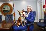 Alcaldesa spends time with Mayor Jane Castor in her office at the City of Tampa municipal building in Tampa, Fla., on Thursday, Sept. 5, 2019. Castor got Alcaldesa, the Spanish term for a female mayor, from the Humane Society of Tampa Bay, where she has acquired all her rescue dogs. She already has three others. She called the humane society staff and asked them to look for a friendly dog for the office.  (Octavio Jones/Tampa Bay Times via AP)