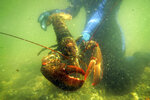 In this July 2007 file photo, a lobster scientist holds a 2-pound lobster underwater in a lobster pound on Friendship Long Island, Maine. Lobster Unlimited of Orono, headed by a longtime lobster scientist Robert Bayer, proposes to use compounds derived from lobster blood to improve human health and possibly the health of other mammals. (AP Photo/Robert F. Bukaty)