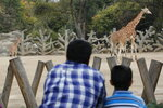 """A two-month-old giraffe, left, stands in her enclosure at the Chapultepec Zoo in Mexico City, Sunday, Dec. 29, 2019. The city zoo is celebrating its second baby giraffe of the year. Giraffes are considered """"vulnerable"""" because the species faces significant habitat loss in the 17 countries in sub-Saharan Africa, where they reside. (AP Photo/Ginnette Riquelme)"""