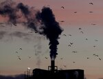 FILE - In this Dec. 4, 2018, file photo, birds fly past a smoking chimney in Ludwigshafen, Germany. Development that's led to loss of habitat, climate change, overfishing, pollution and invasive species is causing a biodiversity crisis, scientists say in a new United Nations science report released Monday, May 6, 2019. (AP Photo/Michael Probst, File)
