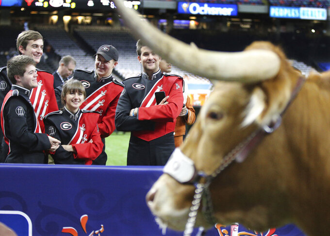 Georgia band members venture a closer look at Texas mascot Bevo before the Sugar Bowl NCAA college football game Tuesday, Jan. 1, 2019, in New Orleans. (Curtis Compton/Atlanta Journal Constitution via AP)