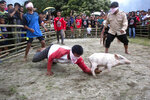 In this Saturday, Oct. 26, 2019 photo, blindfolded men participate in a pig catching competition during Toba Pig and Pork Festival, in Muara, North Sumatra, Indonesia. Christian residents in Muslim-majority Indonesia's remote Lake Toba region have launched a new festival celebrating pigs that they say is a response to efforts to promote halal tourism in the area. The festival features competitions in barbecuing, pig calling and pig catching as well as live music and other entertainment that organizers say are parts of the culture of the community that lives in the area. (AP Photo/Binsar Bakkara)
