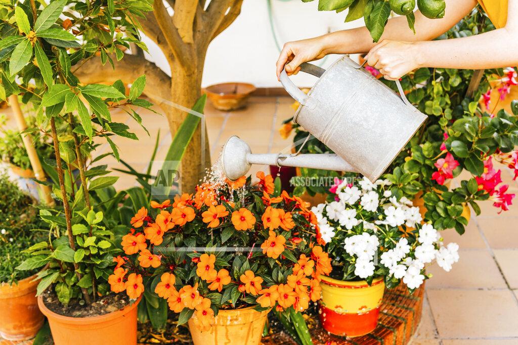 Woman watering plants in home garden