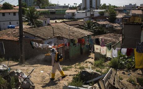 Brazil WHO Zika