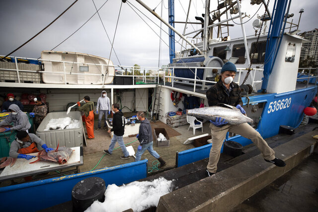 Fishing boat captain Nick Haworth, right, carries tuna to a dock for sale Friday, March 20, 2020, in San Diego. Haworth came home to California after weeks at sea to find a state all but shuttered due to coronavirus measures, and nowhere to sell their catch. A handful of tuna boats filled with tens of thousands of pounds of fish are now floating off San Diego's coast as they scramble to find customers. Haworth was selling on Friday to individuals for less than half what he would get from wholesalers.