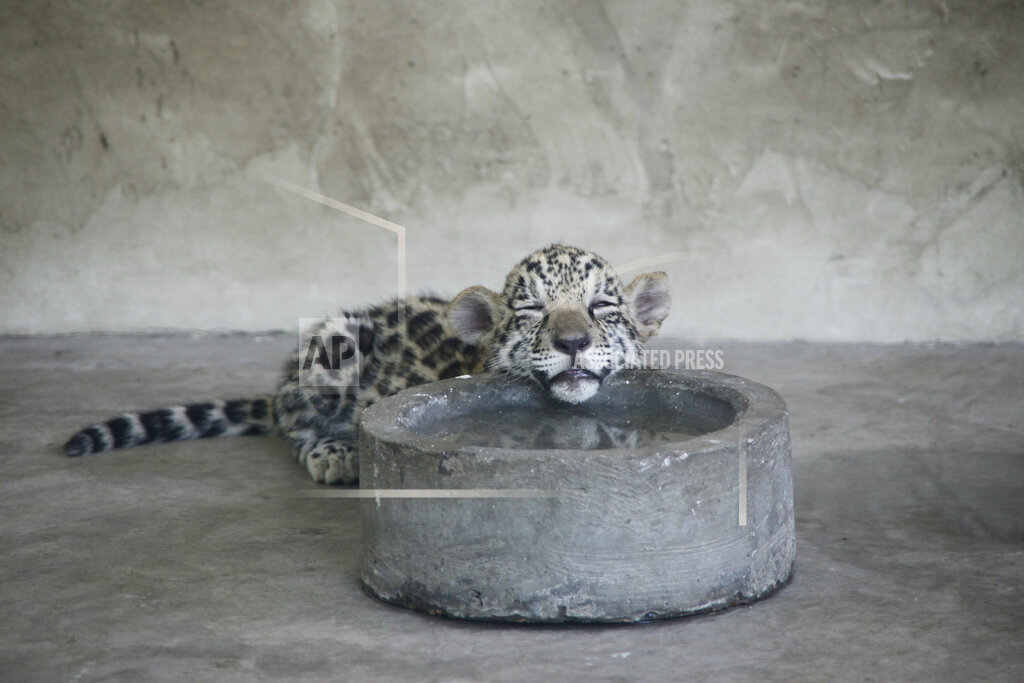 APTOPIX China Zoo