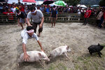 In this Saturday, Oct. 26, 2019 photo, blindfolded men participate in a pig wrangling competition during Toba Pig and Pork Festival, in Muara, North Sumatra, Indonesia. Christian residents in Muslim-majority Indonesia's remote Lake Toba region have launched a new festival celebrating pigs that they say is a response to efforts to promote halal tourism in the area. The festival features competitions in barbecuing, pig calling and pig catching as well as live music and other entertainment that organizers say are parts of the culture of the community that lives in the area. (AP Photo/Binsar Bakkara)