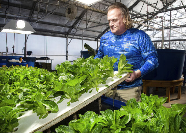 In this Jan. 9, 2020 photo, 302 Aquaponics owner and CEO Doug Wood inspects his lettuce at a greenhouse in Dover, Del. Wood is starting up an aquaponics business that will eventually harvest four types of organic lettuces, tilapia and local honey from beehives. (Marc Clery/Delaware State News via AP)