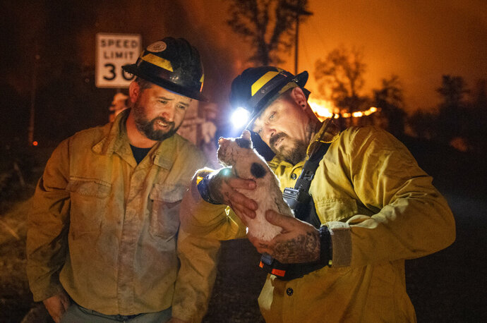 Private firefighter Bradcus Schrandt, right, holds an injured kitten while Joe Catterson assists, at the Zogg Fire near Ono, Calif., on Sunday, Sep. 27, 2020. (AP Photo/Ethan Swope)