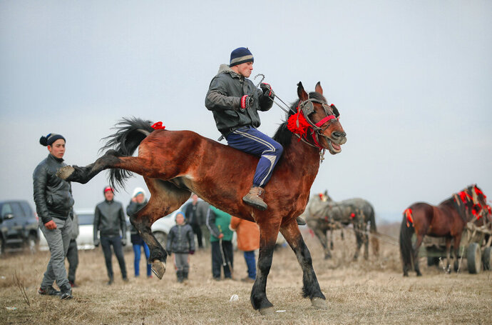 In this Sunday, Jan. 6, 2019, a man struggles to control his horse before an Epiphany celebration horse race in Pietrosani, Romania. The horse race tradition started in the area more then one hundred years ago, according to locals, and it was banned during the years of Communist rule, due to its association with a religious holiday. (AP Photo/Vadim Ghirda)