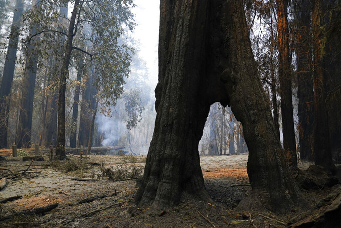 FILE - In this Aug. 24, 2020, file photo, a redwood forest smolders in Big Basin Redwoods State Park, Calif. Sequoia National Park was shut down and its namesake gigantic trees were potentially threatened Tuesday, Sept. 14, 2021, as two forest fires burned in steep and dangerous terrain in California's Sierra Nevada. Giant sequoias are closely related to the redwoods that grow along the Northern California coast and have the same relationship with fire. Last year a huge fire tore through almost all of Big Basin Redwoods State Park. (AP Photo/Marcio Jose Sanchez, File)