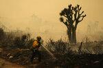 A San Bernardino County Fire Department member hoses down hot spots from the Bobcat Fire on Saturday, Sept. 19, 2020, in Valyermo, Calif. (AP Photo/Marcio Jose Sanchez)