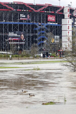 Two Canada geese float along in a flooded area at Bristol Motor Speedway after races for both the Truck Series and NASCAR Cup Series auto race was postponed due to inclement weather, Sunday, March 28, 2021, in Bristol, Tenn. (AP Photo/Wade Payne)