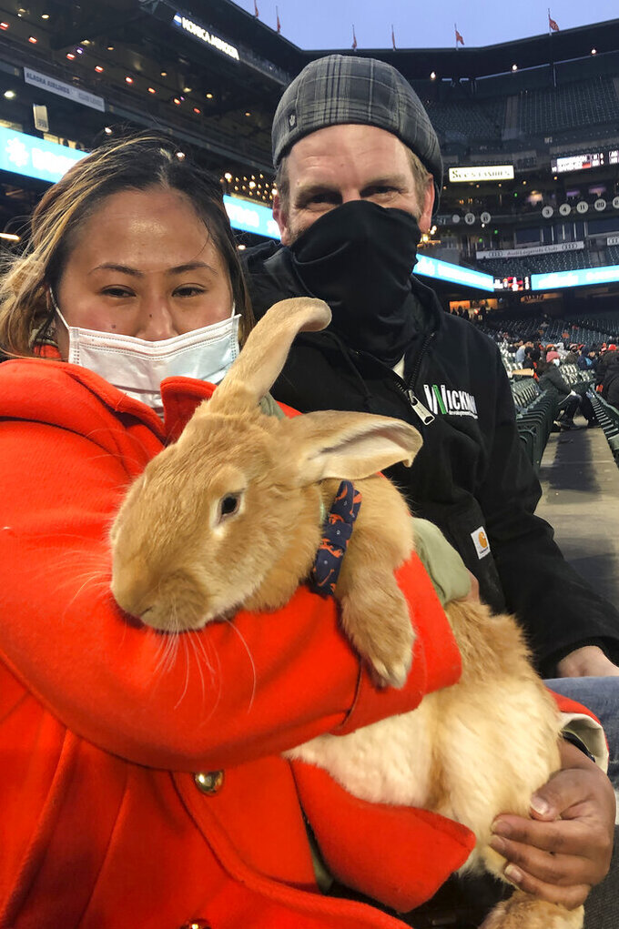 Kei Kato, left, and her fiance, Josh Row, hold a therapy bunny named Alex during a baseball game between the San Francisco Giants and the Miami Marlins in San Francisco, Thursday, April 22, 2021. (AP Photo/Janie McCauley)